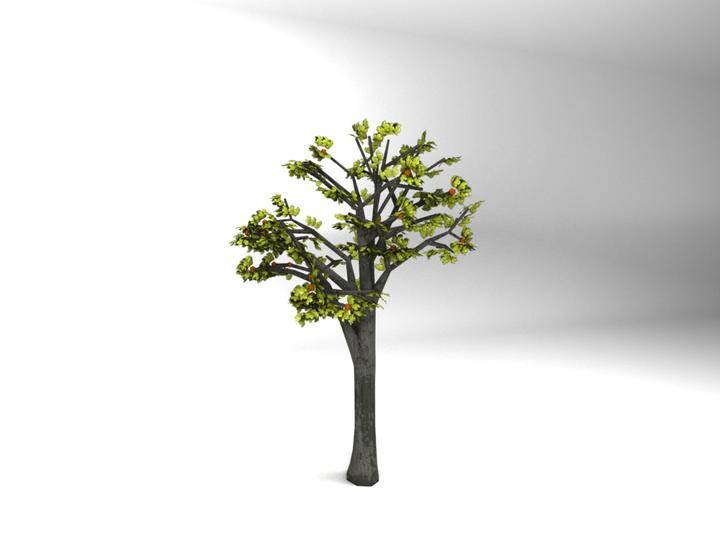 deciduous tree deciduous tree